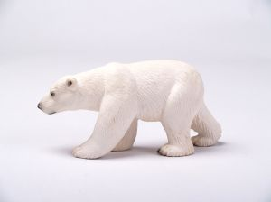 Polar bear white